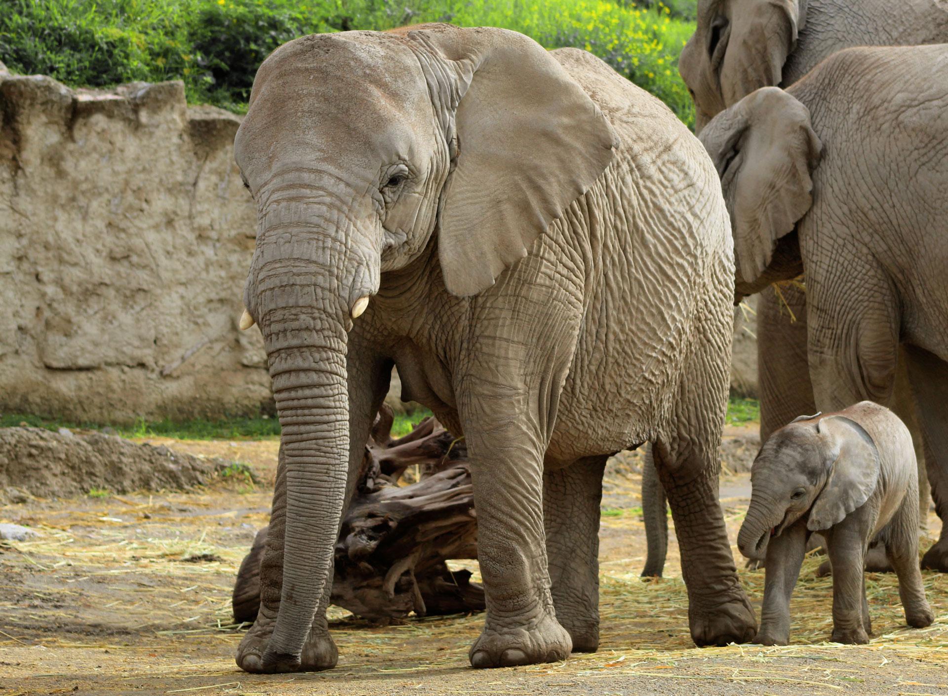 Se puede ver deambulando a elefantes, cebras, leones, jirafas y una gran cantidad de especies