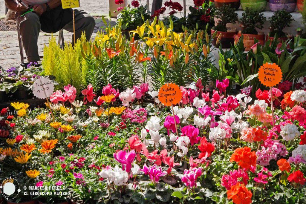 Magnífico surtido de flores de pequeños puestitos que se apostan en el zócalo de Atlixco los fines de semana