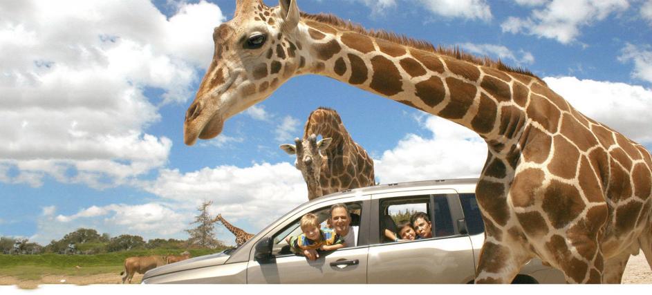 Se interactúa de cerca con los preciosos ejemplares de Africam Safari